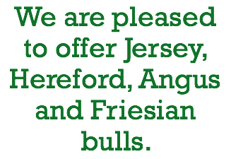 We are pleased to offer Jersey, Hereford, Angus and Friesian bulls.