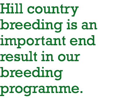 Hill country breeding is an important end result in our breeding programme.